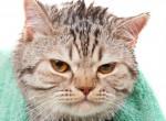 7 tény, amiért utálják az embereket a macskák