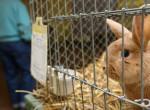 Elég az állatkísérletekből, van út a változáshoz