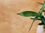 A növény, ami meghozza a szerencsét: Így ültesd el a bambuszt