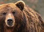 Újra medvét láttak Magyarországon, megmutatjuk, hol - videó!