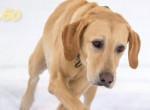 Mindenki egy kutyáért van oda: Nem fogod elhinni, miért