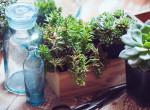 Szebb, mint bármelyik virágtartó: Ezentúl csak ebbe ültetjük a növényeinket
