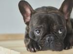 Ezekre a kutyafajtákra jelent igazi veszélyt a nyári kánikula