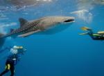 Ezt látnod kell! - 5 hely ahol különleges élőlényekkel úszkálhatsz