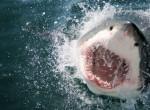 Elképesztő fotók! Így néz ki a világ egyik legnagyobb cápája testközelből