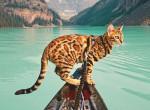 Megdöbbentő, hogy milyen helyeken járt ez a macska