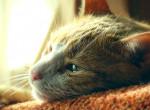Macska mentett életet Szolnokon – Videó