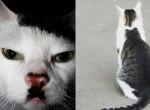 Cicák, akiket a bundájuk mintája tett híressé - Fotók