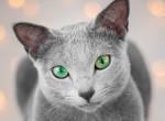 Micsoda gyönyörű macskaszemek! Ők az Instagram legújabb sztárjai