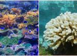 Te melyiket látnád szívesen a nyaraláson? Nem jó jel, ha fehér korallal találkozol