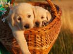 Imádnivaló csodakutya született, még az állatorvosokat is meghökkentette - Fotó