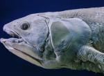 Félelmetes! 60 millió éve kihalt élőlényt találtak