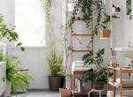 A legszebb párakedvelő növények, amik feldobják a fürdőszobát