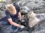 Hatalmas méretek! Megtalálták a legnagyobb dinoszaurusz maradványait