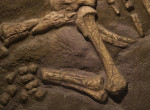 Ez az apró élőlény lehetett a dinoszauruszok őse - Fotók