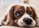 Haj és állatszőr: így szedheted ki őket 2 perc alatt a szőnyegekből