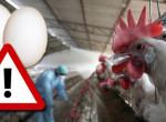 Magyarországra is juthatott a fertőzött tojásokból