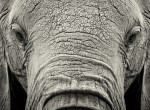 Nincs több szenvedés! Otthont teremtenek a cirkuszi elefántoknak