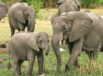 Elefántfürdetés is lesz a Cirkuszok éjszakáján