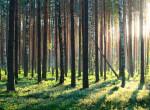 Hátborzongató: Senki sem tudja, mi történt a Szentendre melletti erdőben!