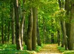 Nem szokványos, az biztos: Ilyen erdőt még te sem láttál!