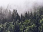 3000 évig felfedezetlenül állt az erdő mélyén: Olasz piramisra leltek a régészek