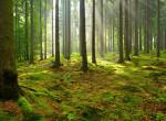 A világ ötödik legfélelmetesebb helye: Mindenki rosszul lesz ebben az erdőben