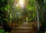 Te is lehetsz hős - Így ments esőerdőt 10 lépésben