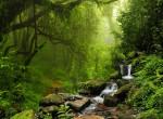 Nemcsak az amazonasi gyönyörű: A világ 7 legszebb esőerdője, amit látnod kell
