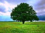 Ez a fa lett idén a legszebb hazánkban - Megvan az Év Fája verseny győztese