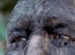 Az igazi Farkasember: Így néz ki a világ legszőrösebb férfija - Videó