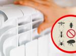 Ez a rovar a fűtési szezon legnagyobb kártevője: Azonnal védekezz ellene