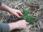 Ez a nő hónapokig gondozta a kedvenc kerti növényét – Majd  jött a hidegzuhany