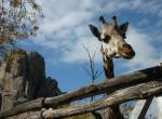 Talán nem mindenki értesült róla, de állatkerti világtanácskozást tartanak épp Budapesten