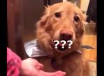 Újabb furcsa kihívás terjed: A te kutyádnak sikerülne?  - Videó