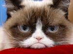 Meghalt Grumpy Cat, a világ leghíresebb macskája!