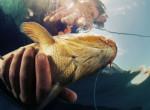 Ilyen az, amikor a lefagyasztott halat kiolvasztják - Videó!