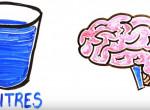 Hétköznapi ételek és italok, amikből ez a mennyiség már halálos lehet