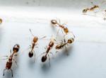 Ellepnek a hangyák? Ezekkel a módszerekkel tuti megszabadulsz tőlük