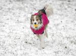 Régóta vártuk már: Itt vannak az első fotók a havas Budapestről