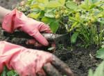 9 természetes gyomirtó, ami megóvja a növényeidet