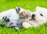 Kedvenceink varázserővel bírnak: Ezért tarts háziállatot