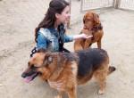 A magyar Hófehérke is imádja az állatokat - Így örültek neki a menhelyi kutyusok