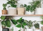 5 tuti növény, ami víz nélkül is sokáig bírja