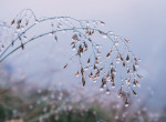 Folytatódik a csúnya ősz: szürke hétvége elé nézünk