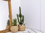 Imádod a kaktuszokat? Ide tedd őket, hogy ne szúrják el a szerencséd