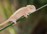 Új állatfajt azonosítottak Madagaszkáron