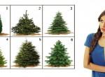 Melyik fenyőt választanád karácsonyra? Ezt árulja el rólad!