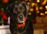 Mindjárt karácsony - fogadj örökbe egy kutyust vagy egy cicát!