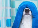 Kék színű kutyák jelentek meg Oroszországban, padlót fogsz a magyarázattól